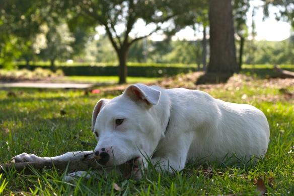 Former Foster Puppy