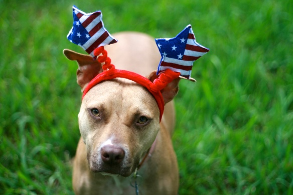 pit bull photo contest