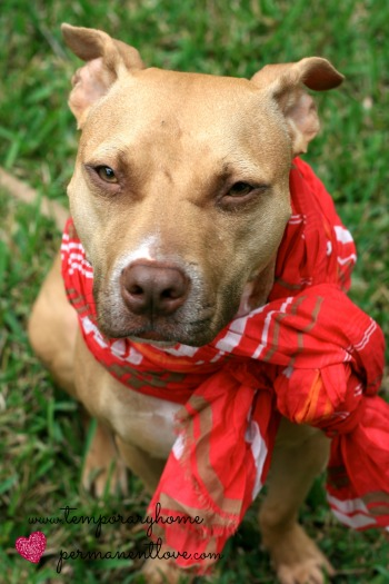 Dog with a scarf.